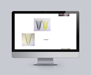 Website Andrea Pesendorfer